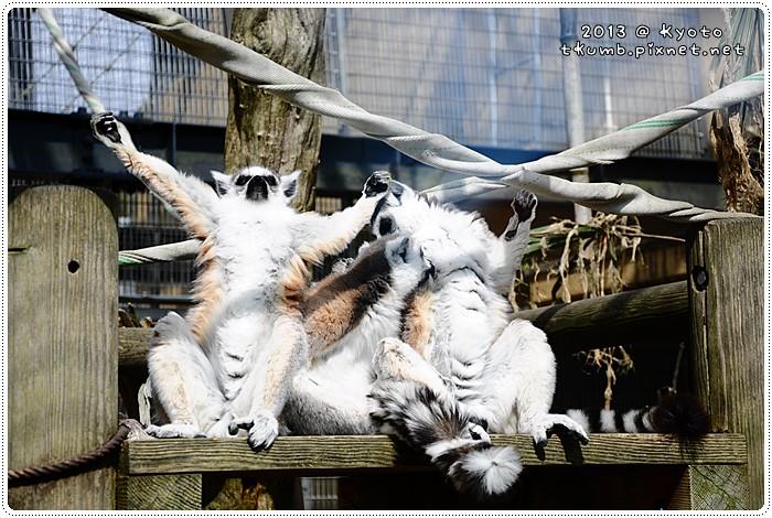 京都動物園 (8).jpg