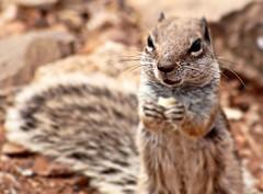 [Free Images] Animals (Mammals), Squirrels, Animals - Standing ID:201303081000