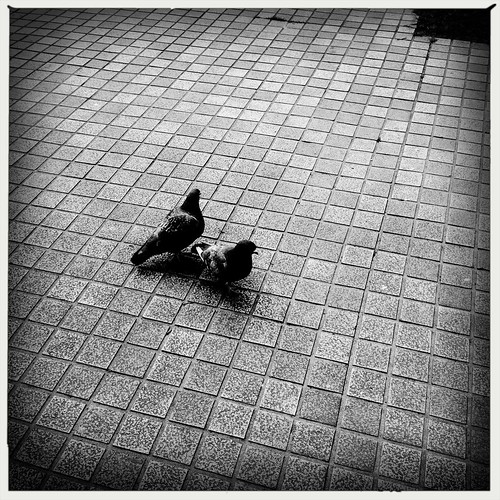 鳩たち #hipstamatic