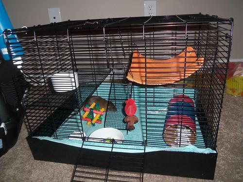 Petco Rats Petco Rat Manor...