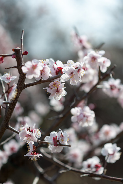 Spring Awake