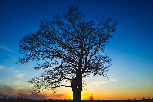 sunset urban tree nature silhouette mobile clouds landscape evening explore galaxy s2 explored