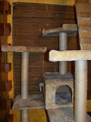 Fixed cat tree