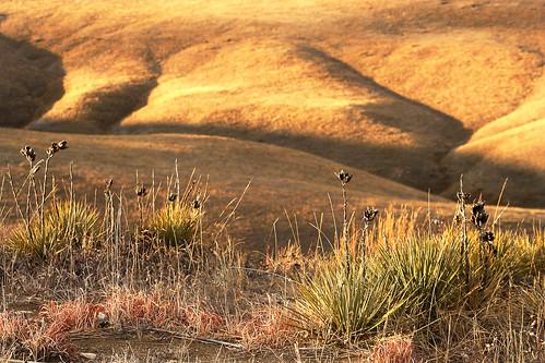 morning sunset favorite brown yellow flora colorado unitedstates superior louisville prairie yucca grasslands