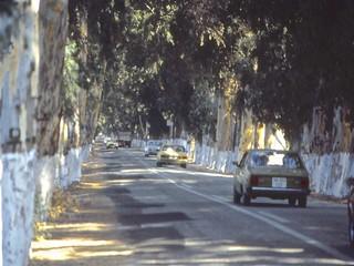 Eucalyptus Way