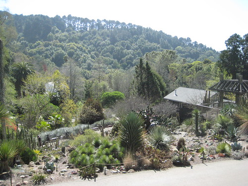 Distant View of Succulent Garden