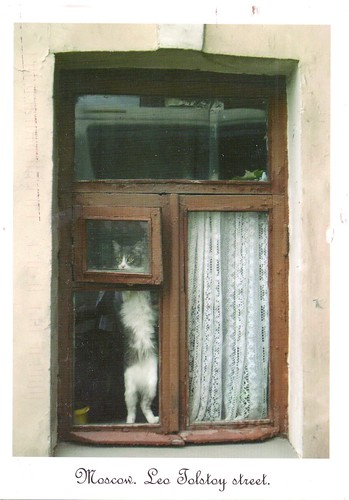 Leo Tolstoy Street Moscow-Cat in the Window
