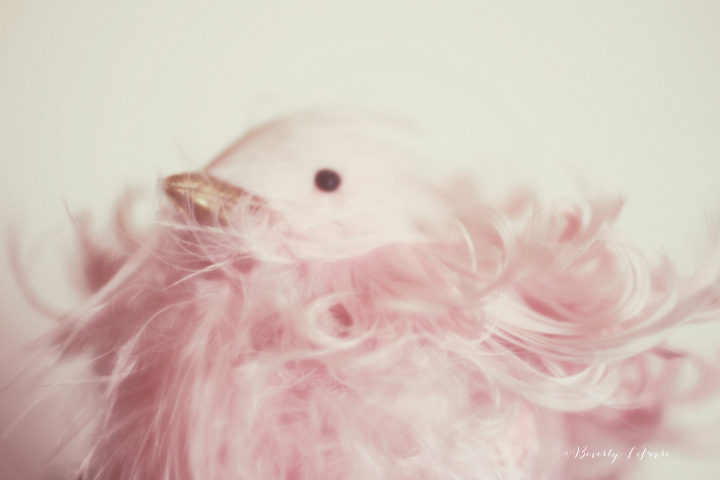 pink chick