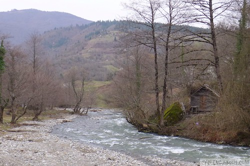A river flowing in Borjomi National Park