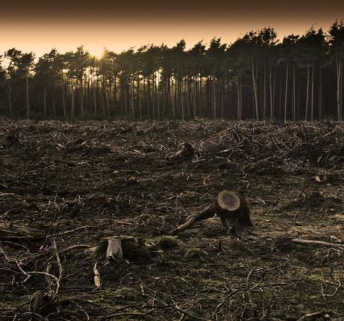 [フリー画像素材] 自然風景, 森林, 森林破壊, 風景 - イギリス ID:201304020600