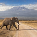 Road through Amboseli by merlune