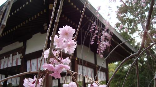 2013/04 上御霊神社