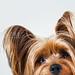 peeking boo by smalldogs