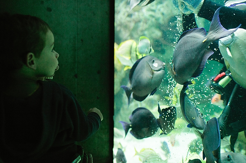 baltimore aquarium trip
