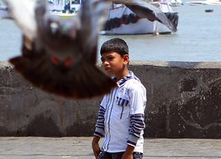 Pigeon dodging at Gateway to India, Mumbai