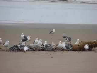Seagull buffet