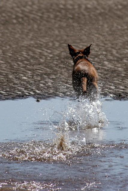 Splish Splash Dog Grooming Bracebridge
