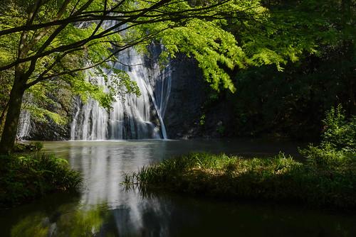new green leaves river waterfall ngc 日本 新緑 島根県 清滝 大田市 02景色