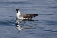 Sea birds & Waders