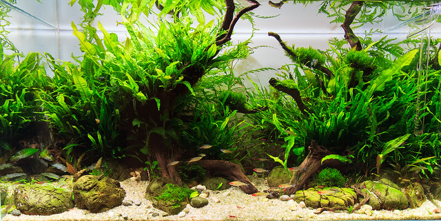 Aquascape 180L