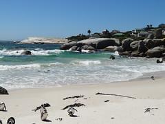 Südafrika 2013-01 098 Boulders Pinguinkolonie