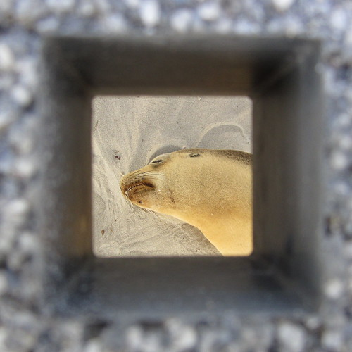 seal under walkway chillin'