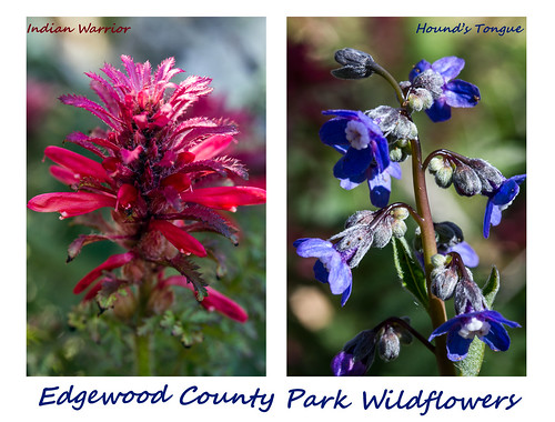 Diptych #4 - Edgewood County Park Wildflowers