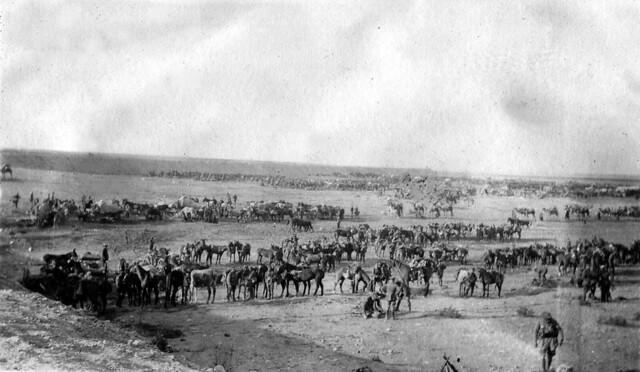 4. Regiment in rest 6 miles from Sidi Barrani 1916