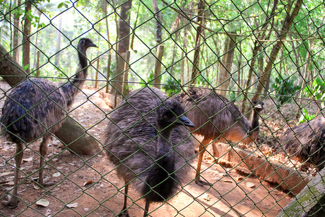 emu (2 of 1)