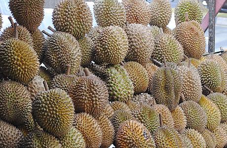 Depot Durian Ayah