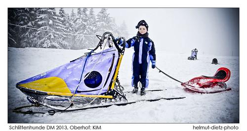 Between two sleds: TIM - Zwischen zwei Schlitten: TIM - helmut-dietz-photo-2013