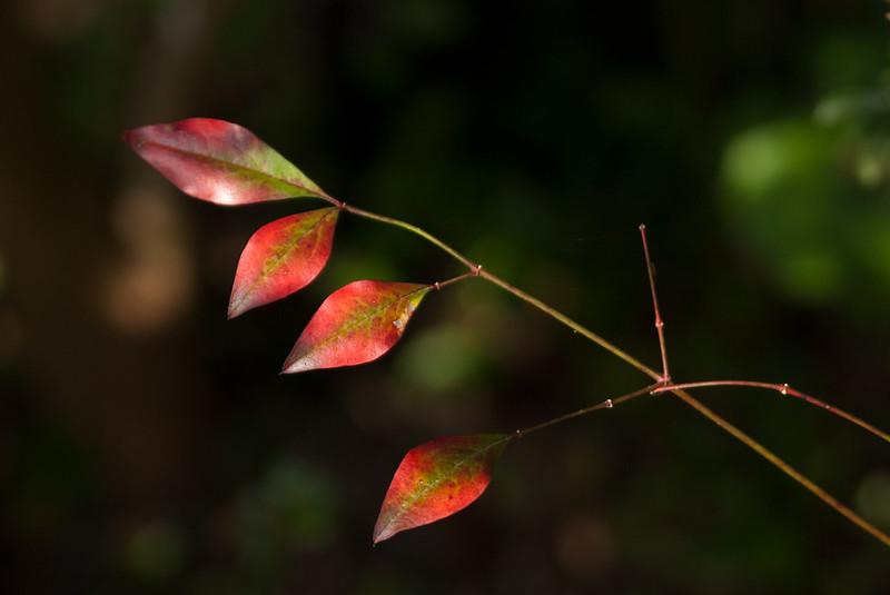 葉leaves