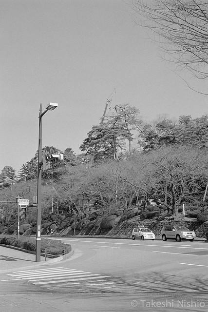 クレーンで高枝切り / Cutting top branch with crane