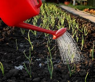 regando jardín