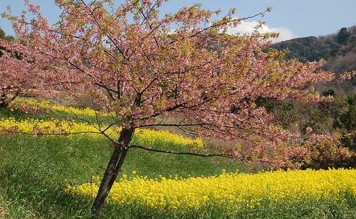 ★里の春★つくし