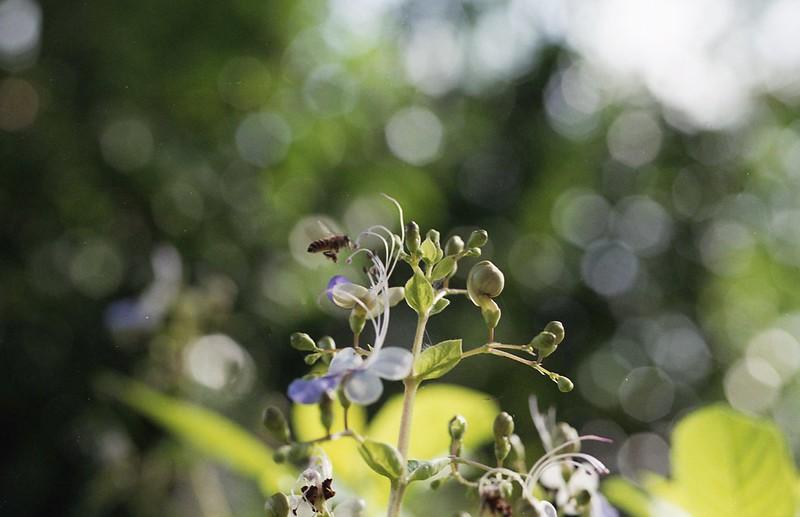Macro at Botanics
