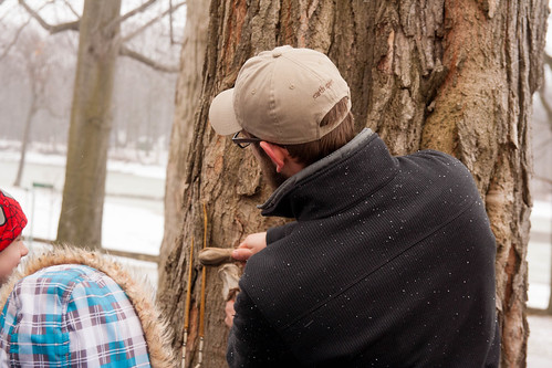maple sugaring (3)