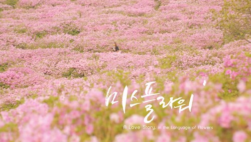 Guiltless Getaways Kto Miss Flower Spring Review Korea In Spring