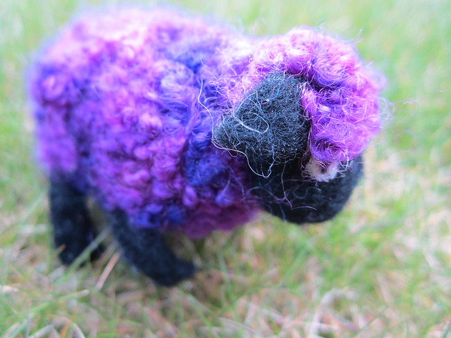 strange grazing sheep (4)