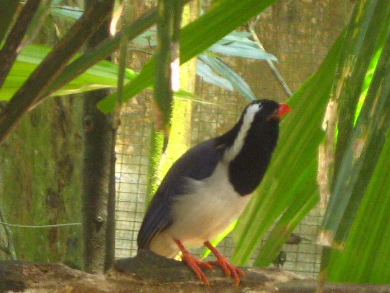 Taiping Zoo IMG_5972