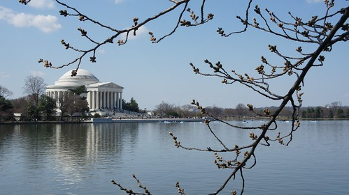Tidal Basin with pre-blossom cherry buds