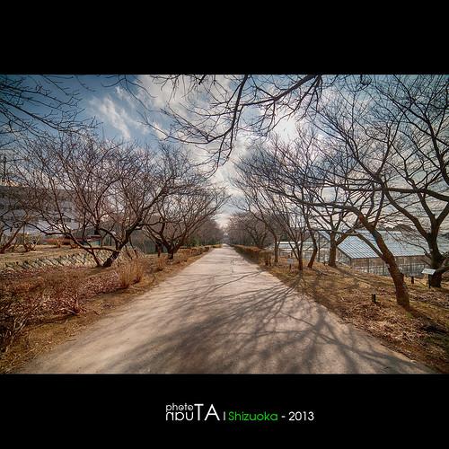road tree japan landscape path