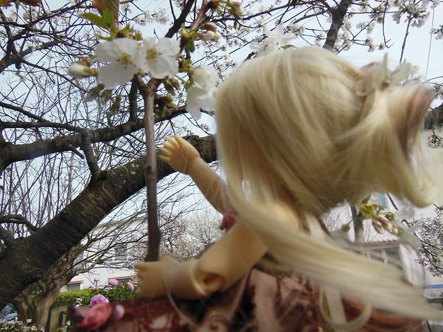 [Toulouse] Résine et fleurs de cerisier 8628512835_002f3fc98b_z