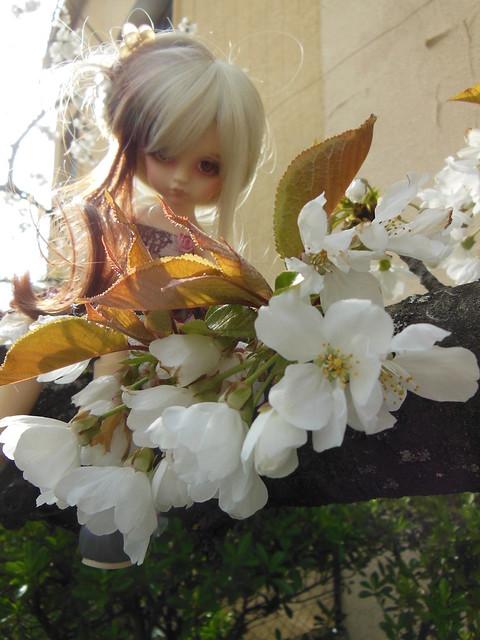 [Toulouse] Résine et fleurs de cerisier 8628520925_e857a31632_z