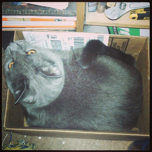 Did the Ancient Egyptians invent the cardboard box? Hmmmm. #Lester #CatInBox