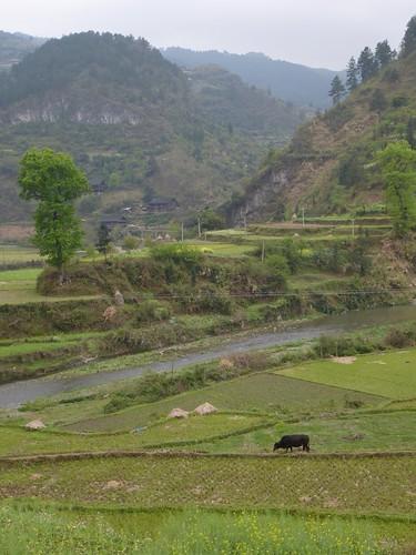 Guizhou13-Kaili-Shiqiao (104)