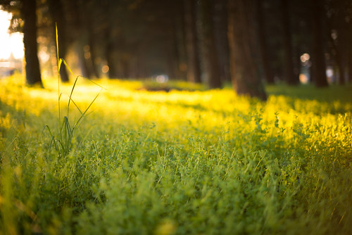 trees light shadow green grass yellow forest spring udine nikond800 50mmafsf14g