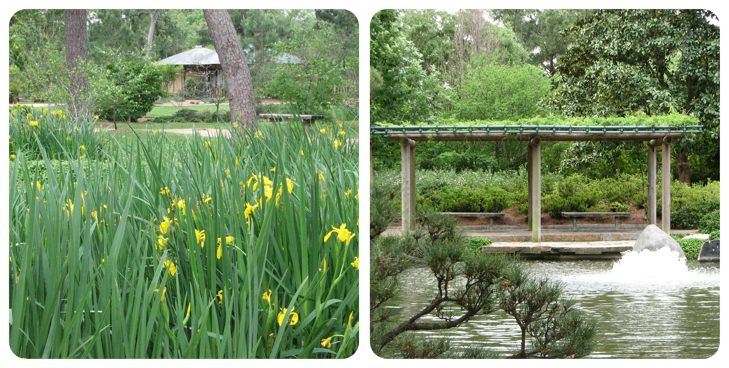Japanese Garden Collage