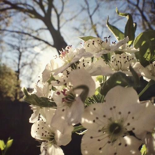 flower bloomin' freakin' sunflare