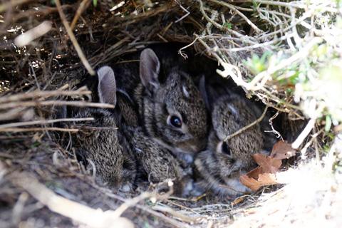 bunniesagain-0413